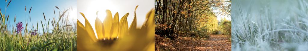 banniere-saisons-la-gree-des-landes