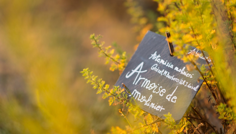 jardin-botanique-yves-rocher-la-gacilly-armoise